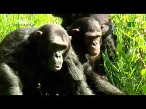 Thế giới động vật hoang dã-King Kong(Thuyết minh)