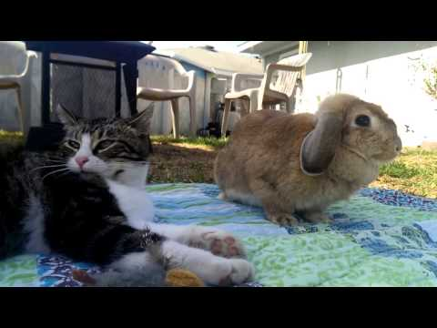 Cat and Rabbit best friends(2)