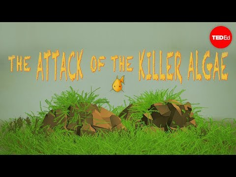 Attack of the killer algae - Eric Noel Muñoz
