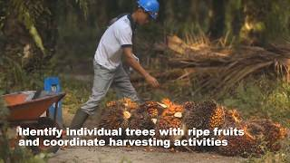 Modernizing Palm Oil Plantation in Indonesia