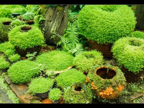 How to Grow Moss Garden Indoor