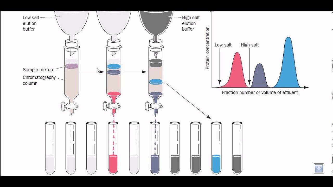 Ion Exchange Chromatography Youtube