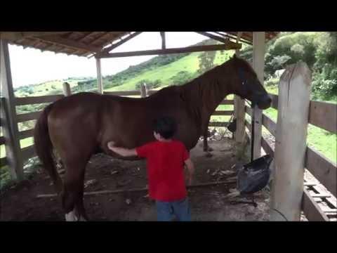 Vida na Fazenda Parte 2 Como escovar o Cavalo