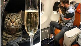 مسافر يحاول تهريب قط بدين داخل طائرة روسية