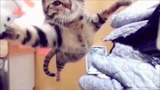Funny Cats And Dogs - Video Gracioso De Gatos Parte 2 - FUNNY CAT VIDEOS PART 2 - Videos Muy Chisto