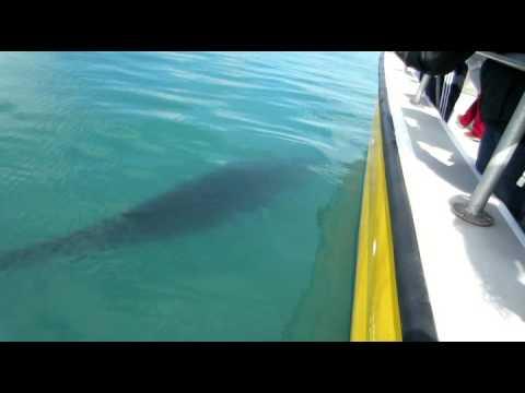 Minke Whale Trip Aquaventures May 2014