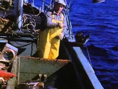 Fishing Vessel Polaris Longlining 1950