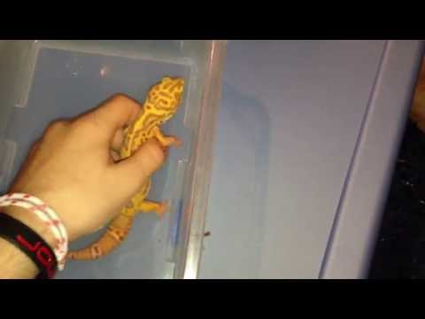 Reptiles That Make Good Pets