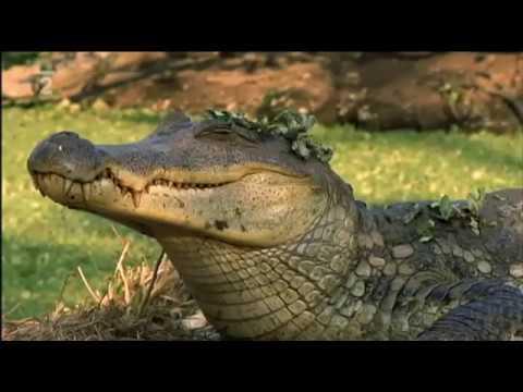 Amazonské príšerky