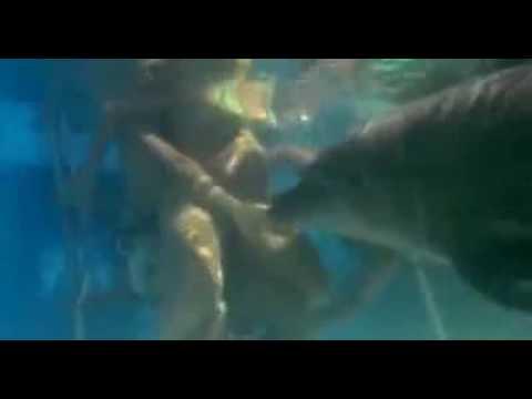 Dolphin Helping Human Birth