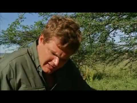 *RAY MEARS* AFRICA SAFARI (FULL EPISODE)