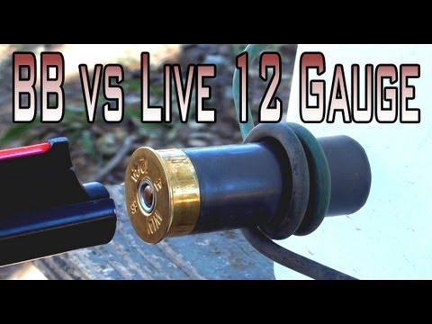 BB Fired at a Live 12 Gauge Shell