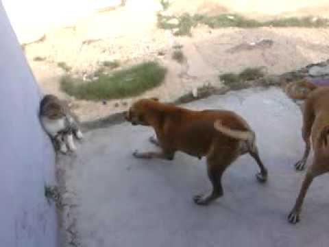 Videos desnudos de pelea de gatos