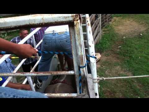 toros de reparo 2011