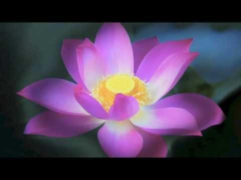 Lotus flower bomb lyricslotus flower bomb instrumental with lyrics lotus flower bomb instrumental lyrics instrumental mightylinksfo