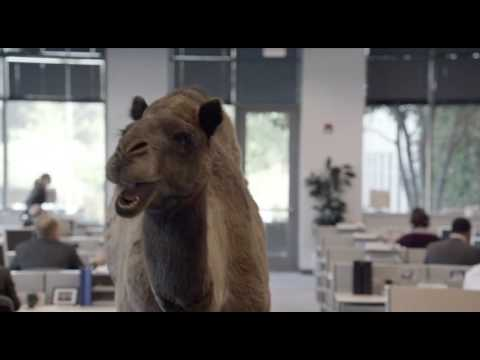 Geico - Hump Day REMIX