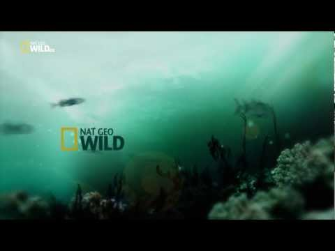 Nat Geo Wild HD Italy 1080p NEW !! 2012