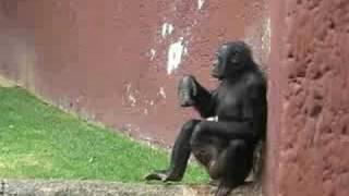 Mono bailarin