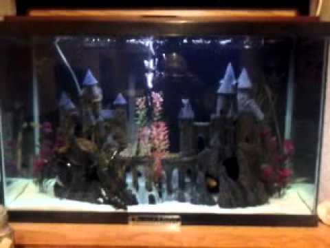 29 gallon harry potter tank youtube for Harry potter fish tank