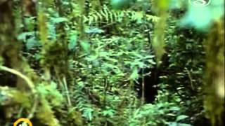 Zvierací rekordmani - Extrémene príšery
