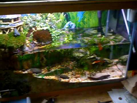 how to get green out of white sand fish tank