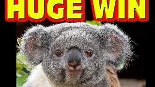 Koala Kash HUGE PROGRESSIVE WIN Las Vegas Slot Machine Big
