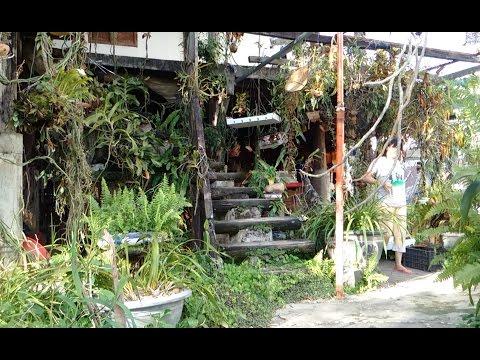 Phần 2 (Cực Hay): Hoa mắt với Vườn Lan rừng đủ các loại lan Quý số 1 | Orchid Garden |