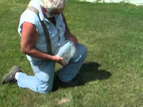 Gopher.in.a.jug.wmv