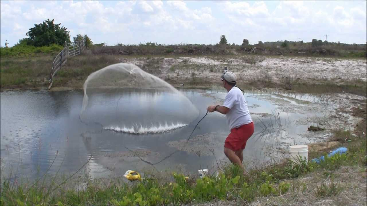 Golden shiner gold mine throwing a big cast net for live for Throw nets for fishing