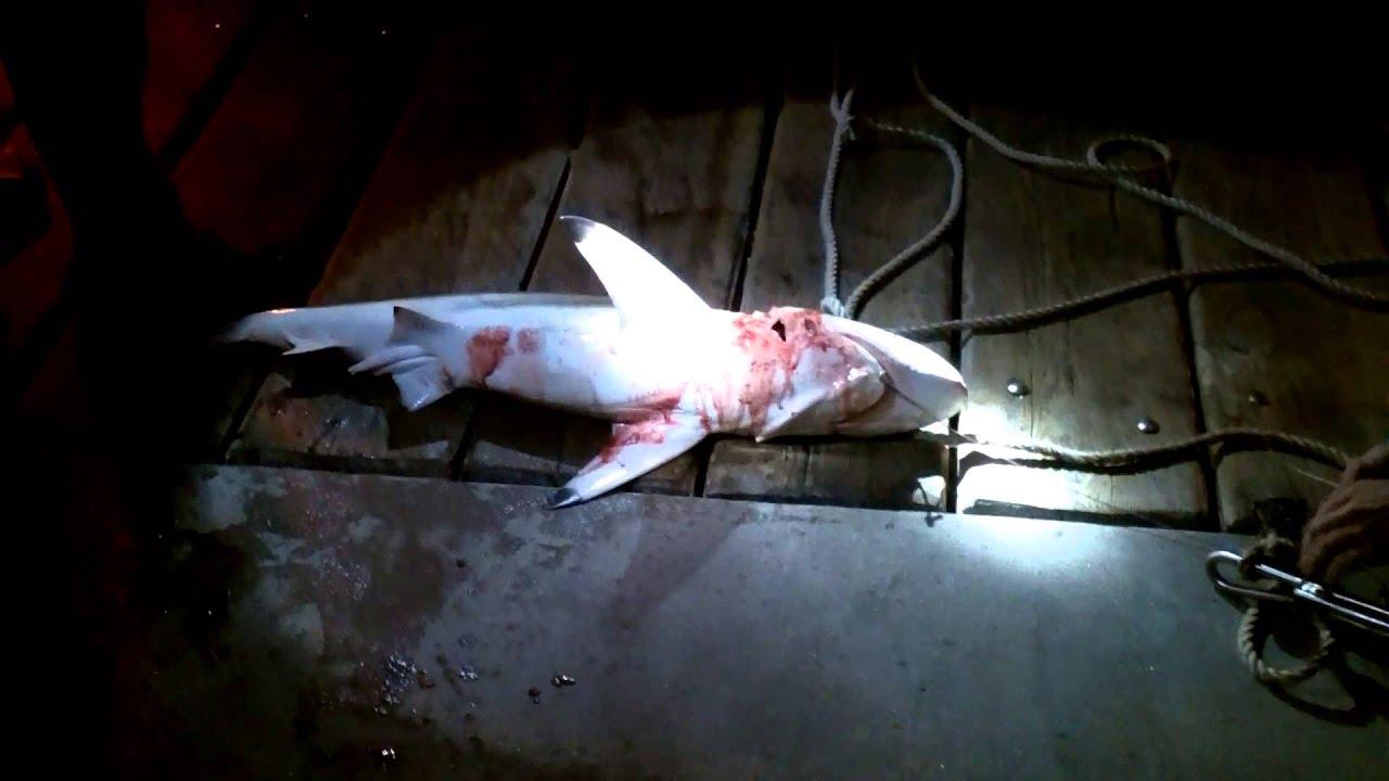 Pier shark fishing panama city beach dan russels pier for Shark fishing panama city beach