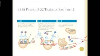 Chapter 3 Cell Structure and Function Part 2