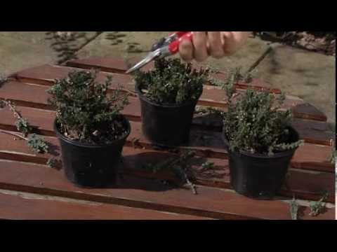 Tailler les bruy res d 39 hiver colour your life youtube - Youtube jardin d hiver ...