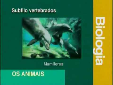 A 02 - Sistemática e Taxonomia - Biologia - Vestibulando Digital