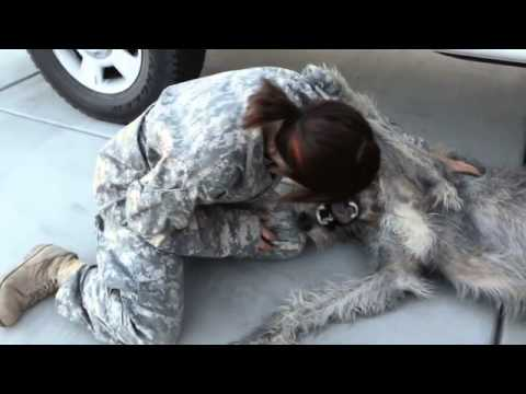 Iams Dog Food Commercial With Army Lady