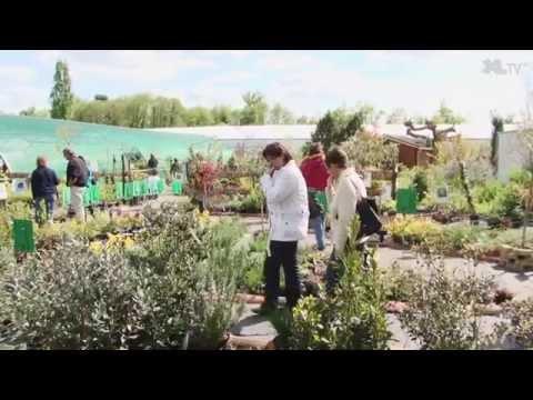 Les Jardins de Nonères, une pépinière pas comme les autres...