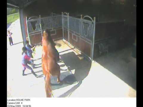 Holme Park Legend collecting on phantom mare