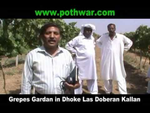 POTHWAR (Future) ANGOOR VALLEY Gujar khan 2012 Part :2