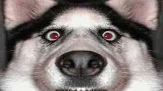 Perros chistosos