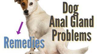 Dog Anal Gland Problems
