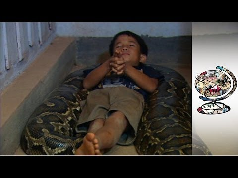 A Cambodian Boy Who Sleeps with a Python