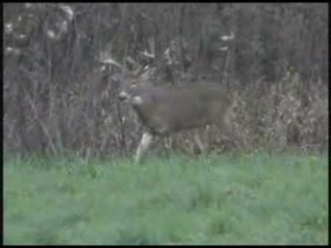 Deer Hunting with Decoy, Big Buck