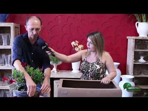 Floricultura Romana & Joceano Setti