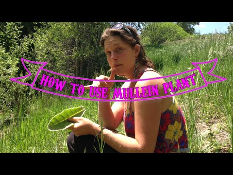 how to use mullein plant for health and healing with Hayley Porter