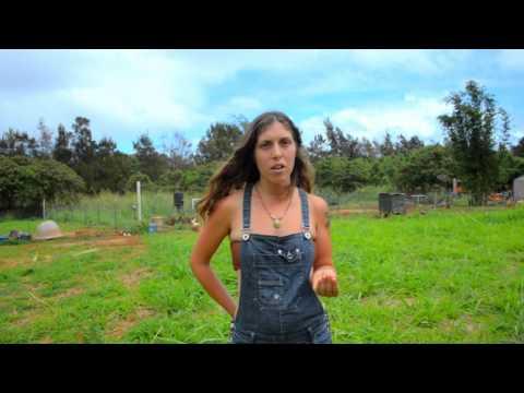 Kauai Permaculture Preview - Happy organic farm animals