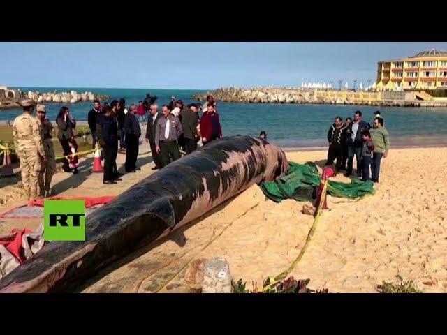 Una ballena de 12 metros de largo aparece en una playa de Alejandría (Egipto)