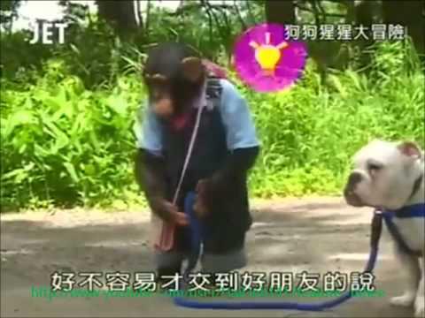 Hành trình chú khỉ thông minh và bạn chó : Tập 2 - Đi đưa dưa