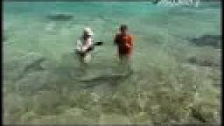 Shark Bites Caught On Film