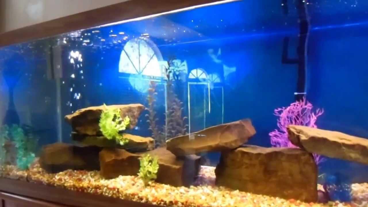 200 Gallon Cichlid Aquarium Fish Tank - YouTube