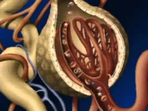 Fisiologia Del Ri U00f1on