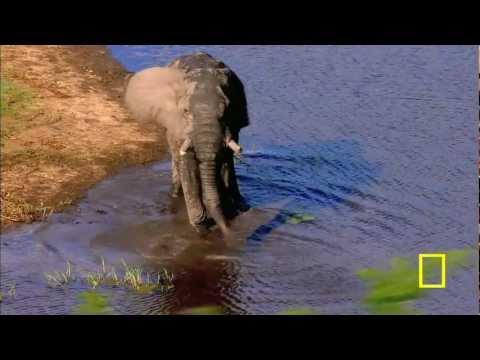 שמורת הטבע במוזמביק
